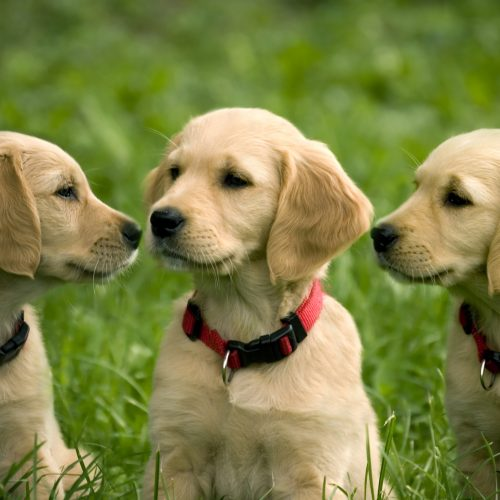 Cost of Dog Ownership – What you should know