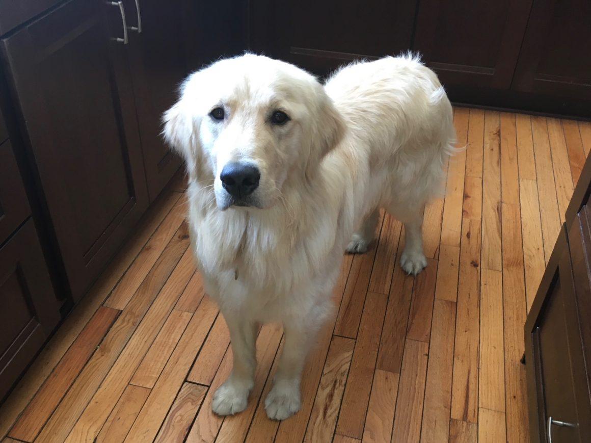 Meet Arthur!