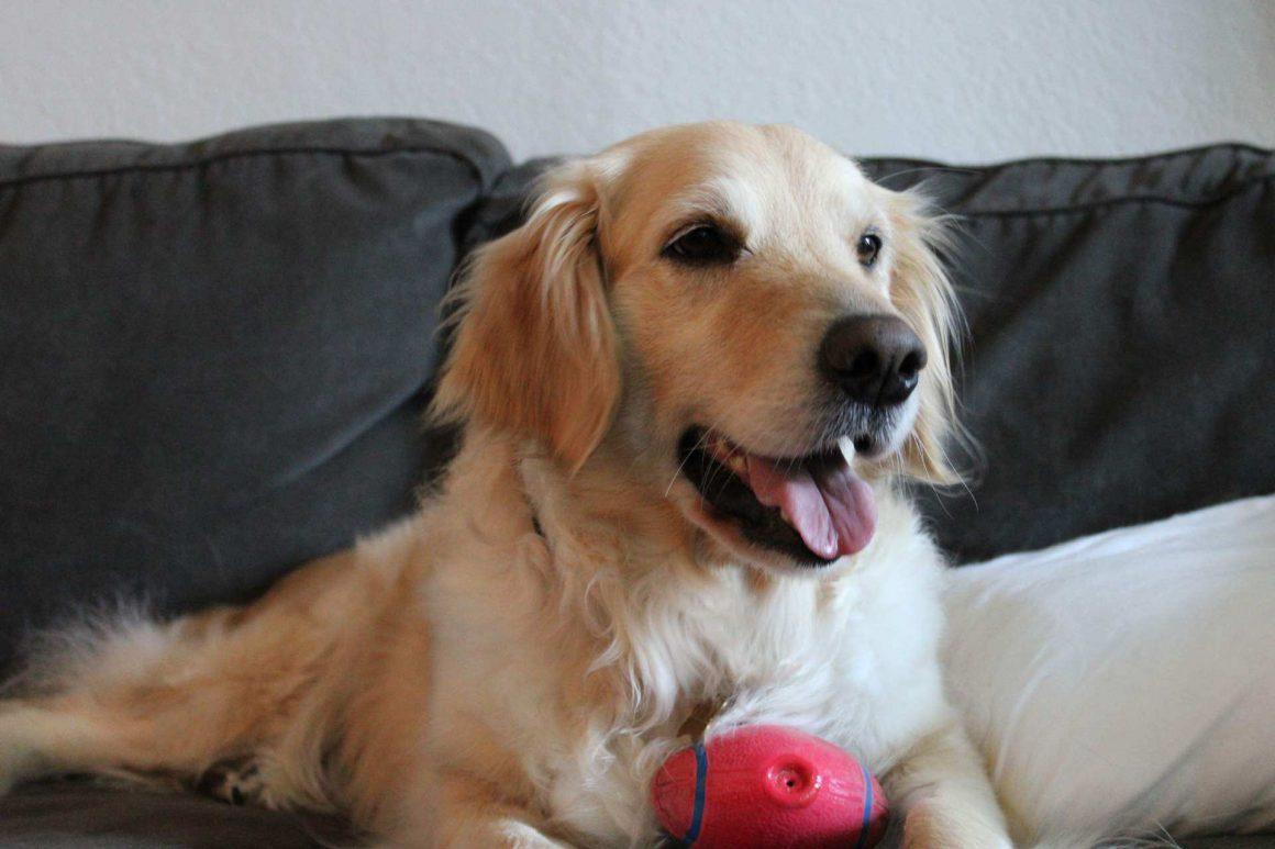 Meet Sammy!