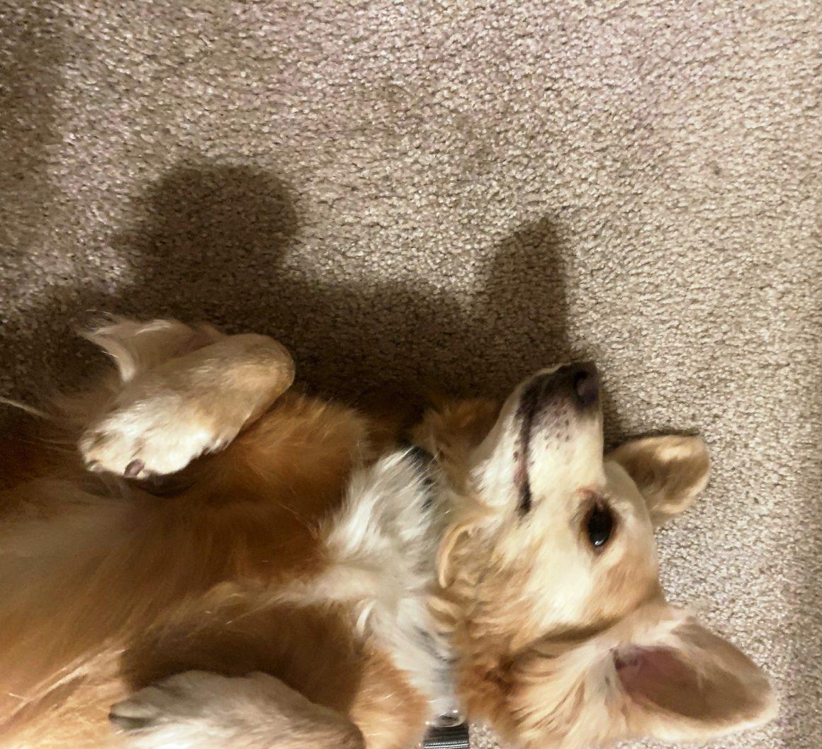 Meet Rupert!